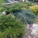 Частное озеленение: горки