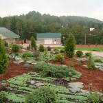 Частное озеленение: цветники