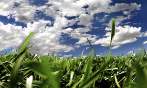 Долгожданный газон весной
