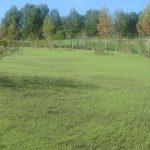 Гидропосев травы