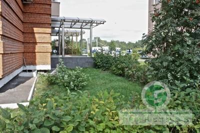 Озеленение придомовой территории
